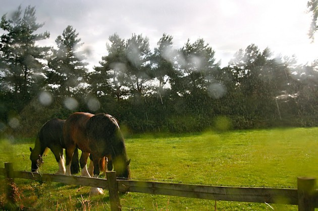 Our neighbours...neigh-bours...