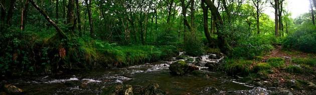 Forest outside Laragh