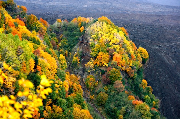 Autumn colours of the Valle de Bove, from near Mount Zoccolaro