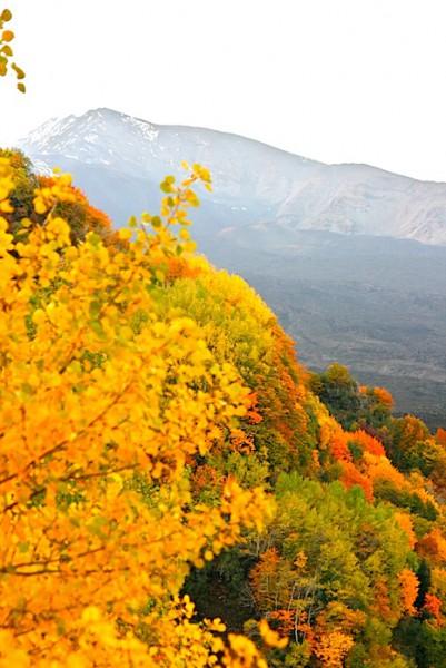 The Valle de Bove, from near Mount Zoccolaro