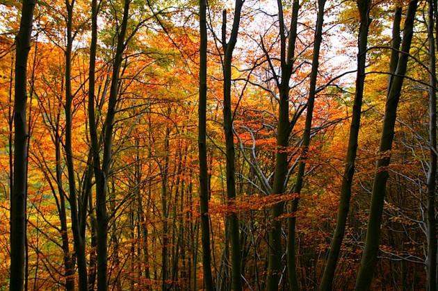 Autumn colours near Mount Zoccolaro