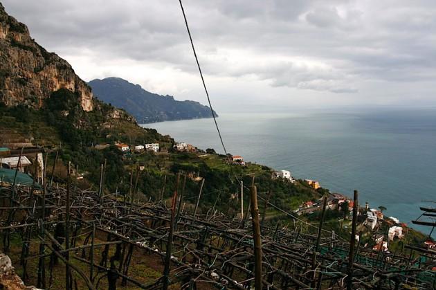 Bare vines on the Amalfi coast