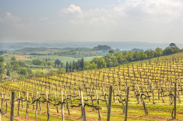 Tuscany Vineyard HDR