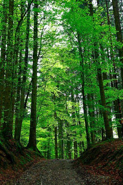 Woods near Memmingen, Germany