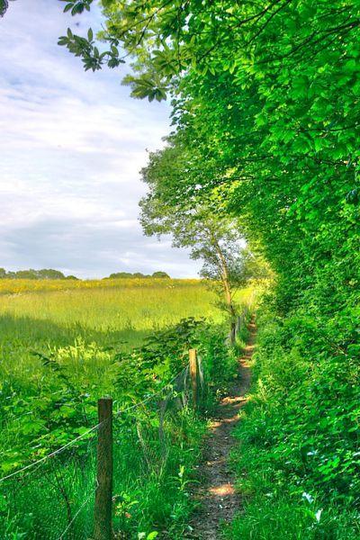 Field pathway