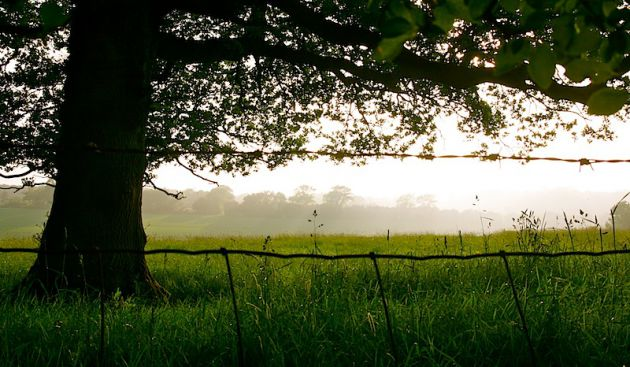 Tree and misty field