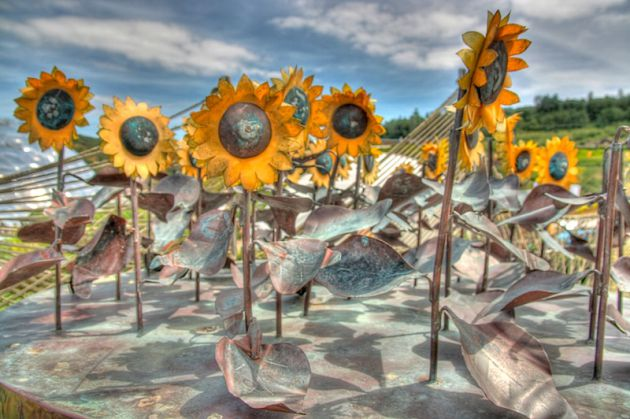 The Eden Project Sunflowers, HDR