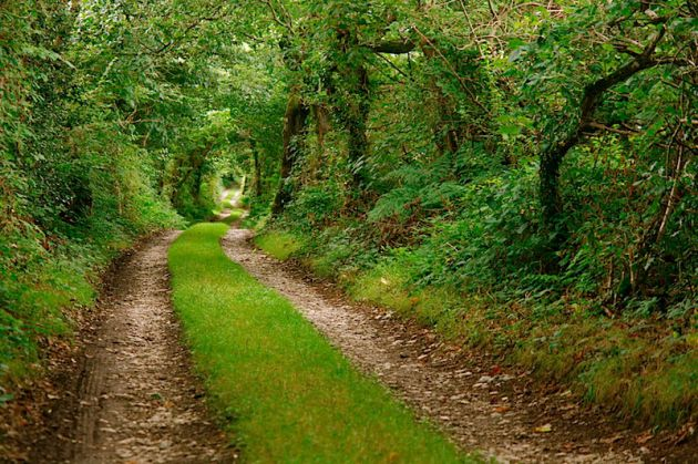 Cornwall Country Lane