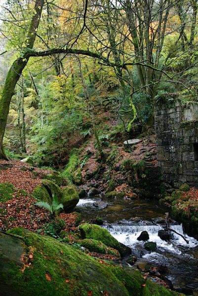 Kennall Vale Mills Cornwall, Autumn