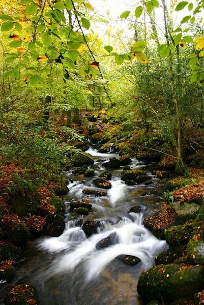 Kennall Vale Mills Cornwall, Autumn