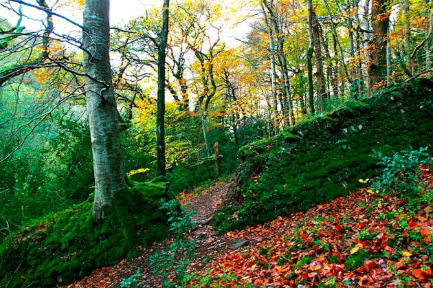 Exmoor National Park Devon UK Autumn Fall Hike