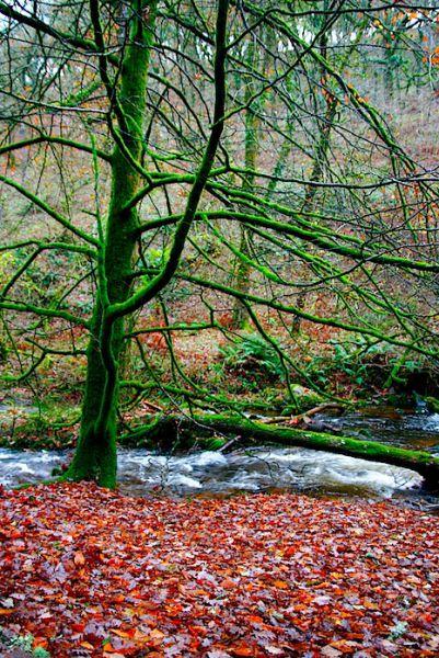 Exmoor National Park Devon UK Autumn Fall Hike
