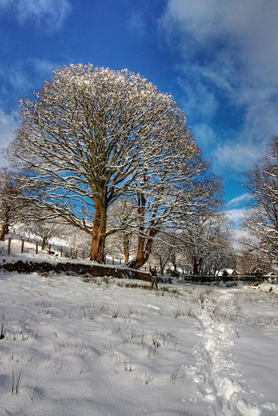 Oak Snow Wales