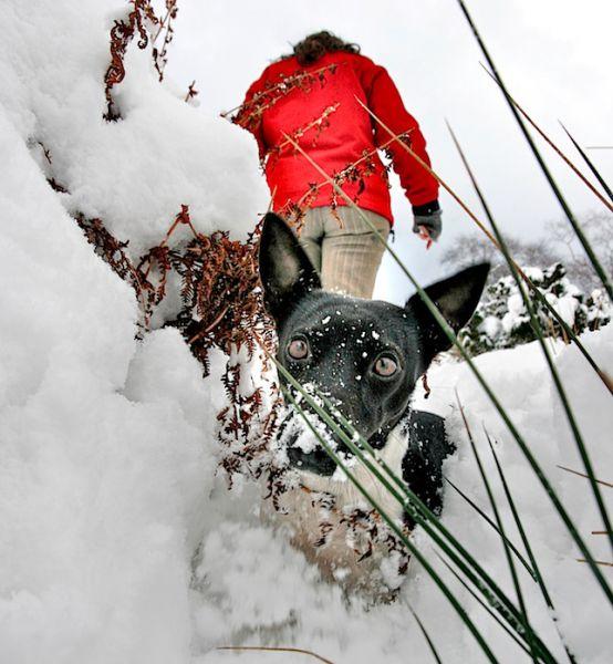 Snowy Zoe, Lygos