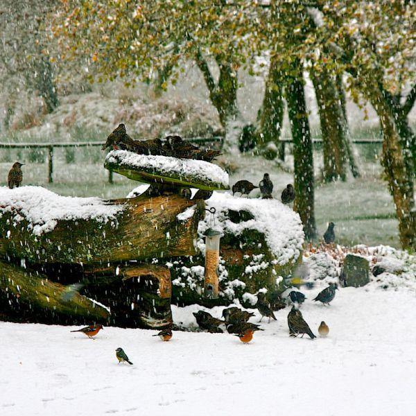 Wales Birds Snow