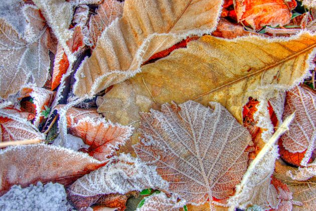 frost autumn leaves, hdr