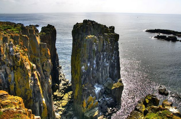 Cliffs of Isle of May