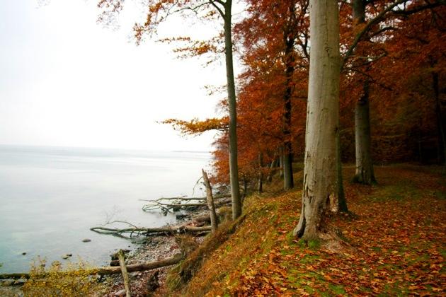 Autumn Trees on the Coast