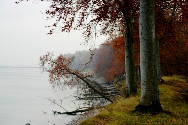 Autumn Trees on the Coast_2