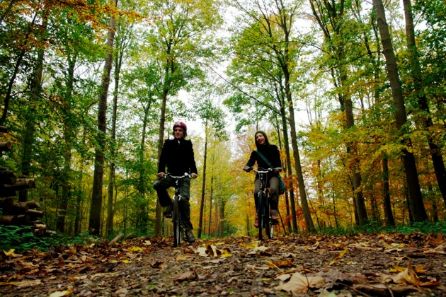 Cycling in Autumn Woods