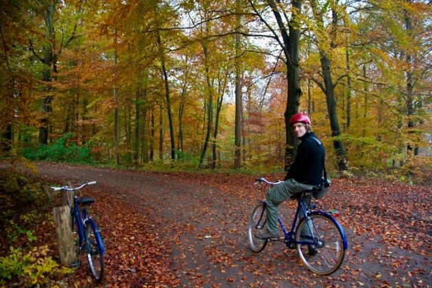 Cycling Through an Autumn Wood