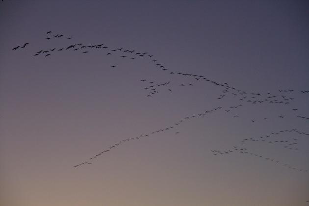 Crane migration 3