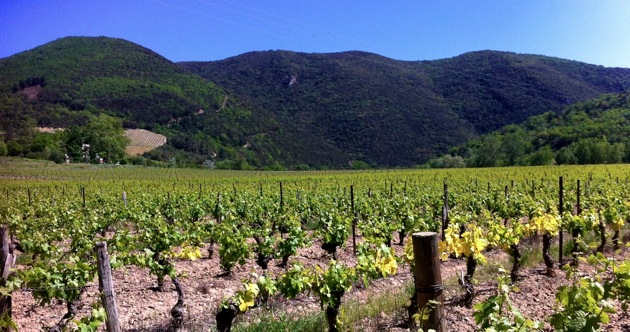 Vineyards, Limoux/Alet-les-Bains